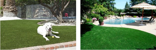 Pets Also Love Your Artificial Grass