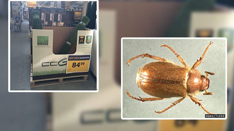 European Pests Drive Vancouverites to Artificial Grass
