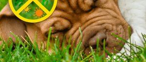 CCGrass Extra Guarantee Landscape artificial grass product