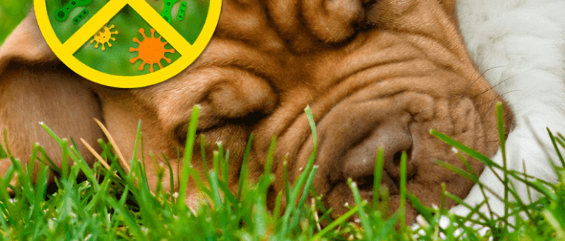 Antibaterial  Grass Series, Double anti-microbial, Long-lasting Protection