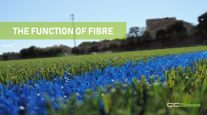 The function of the fibre-CCGrass
