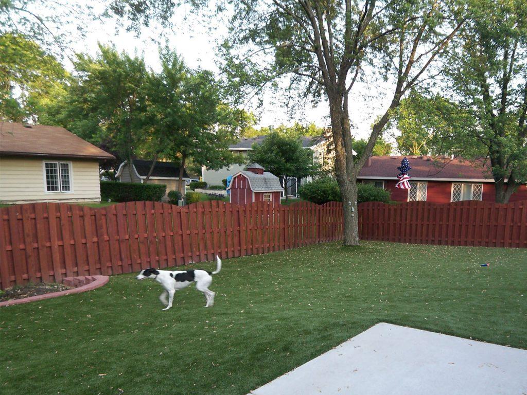 CCGrass, artificial grass for dogs, pet grass