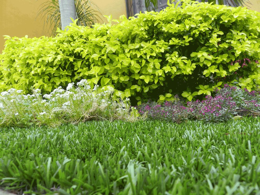 CCGrass, landscape grass, synthetic turf for garden