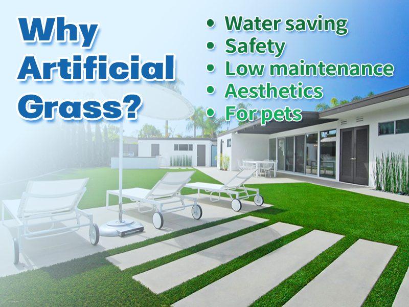 CCGrass, landscape grass, garden grass