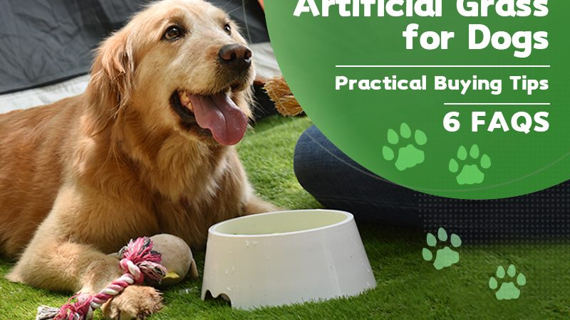 Artificial Grass for Dog – Practical Buying Tips (6 FAQS)