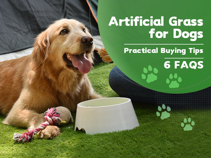 CCGrass, artificial grass for dogs