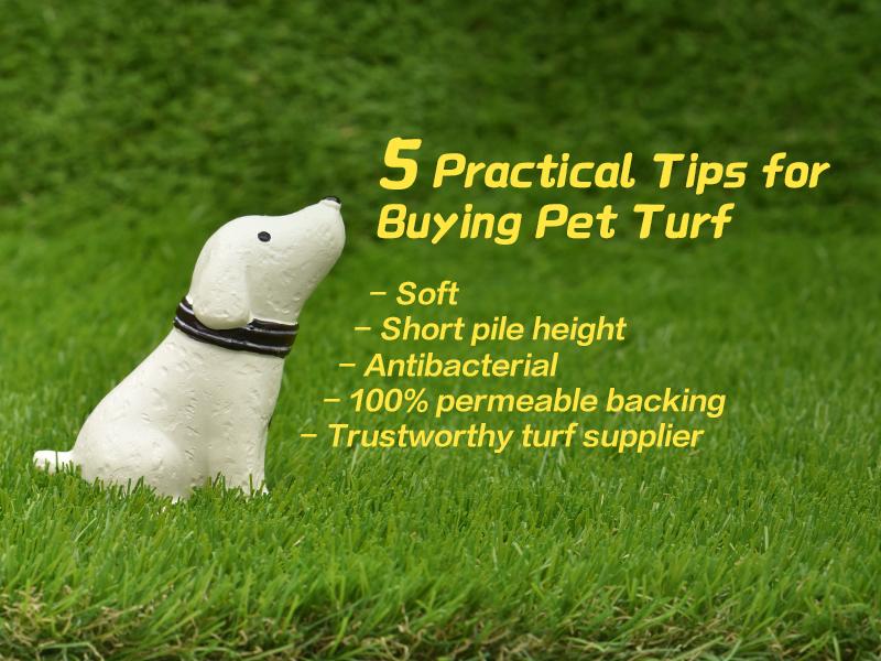 CCGrass, artificial grass, pet turf