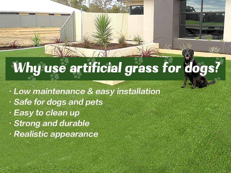 Why use artificial grass for dog