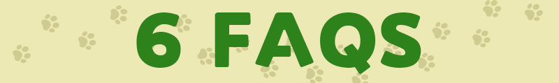 artificial grass for dogs, 6FAQS
